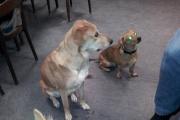 Lea, Mimo und Ginger