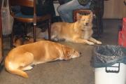 Lea und Mimo