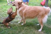 Lea & Ginger